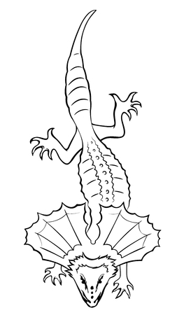 Frilled-necked lizard. Outline vector illustration