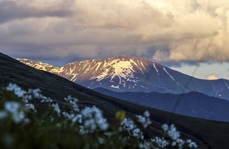 Mountain landscape. Hills with snow in evening sunlight. Wild flowers on the foreground is blurred. Summer in Georgia.