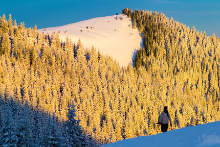 The silhouette of a man against the backdrop of a mountain forest in snow. The morning sunshine on a hill that covered with spruce forest