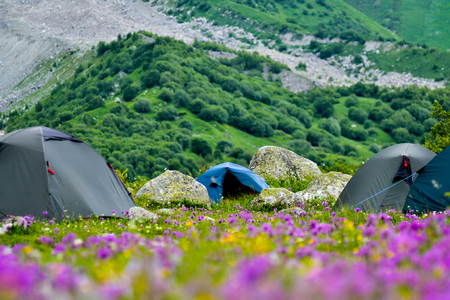 Tent camp on a lawn between large stones and purple yellow field flowers. Summer in Georgia. Zdjęcie Seryjne