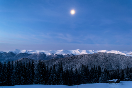 Early morning in the mountains. Moon is shining on the hills. Spruce forest. Winter. Magic hour. Ukrainian Carpathians Zdjęcie Seryjne