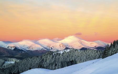 Morning mountain view. Three snowy peaks. Orange sky. Ukraine. Carpathians Zdjęcie Seryjne