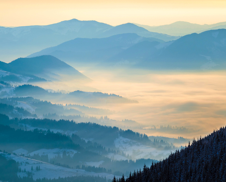 Blue mountain ranges. Valley in the clouds. Morning sunlight Ukrainian Carpathian Mountains Zdjęcie Seryjne