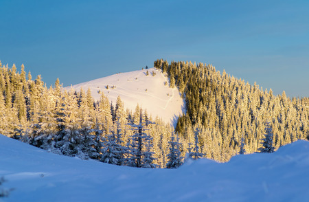 Mountain forest in snow. The morning sunshine on a hill that covered with spruce forest Zdjęcie Seryjne