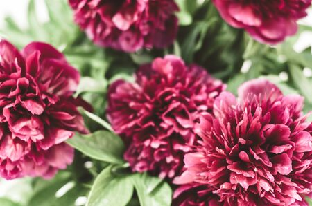 Floral background. Bouquet of red peonies. Selective focus. Spring and summer background Zdjęcie Seryjne