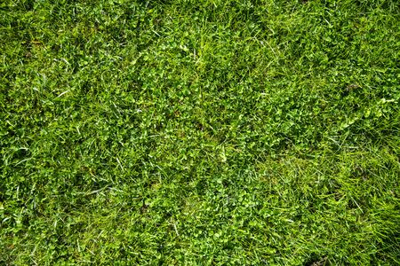 Green lawn for background from the backyard of the house. Nature. 版權商用圖片