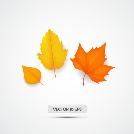 Autumn leave. Autumnal foliage isolated. Orange leaf maple. Vector illustration