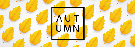 Fall leaves. Autumn background with leaves. Vector illustration