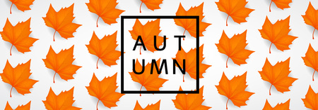Fall leaves. Autumn background.