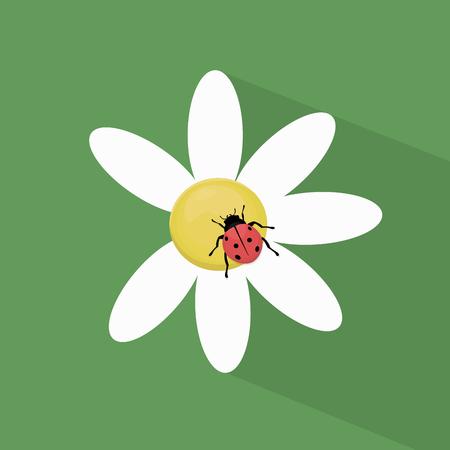 ladybug: Ladybug on camomile