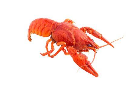 Boiled crawfish close-up. isolated on white background Stock Photo