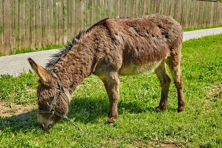 Portrait of a donkey on green grass