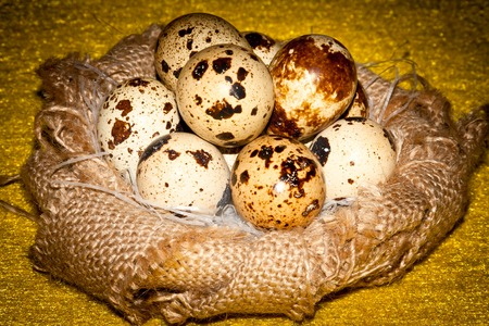 homogeneous: quail eggs in an artificial nest of natural burlap on a homogeneous background Stock Photo
