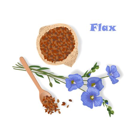 Hand drawn vector illustration of flax plant and seeds in sack and spoon Çizim