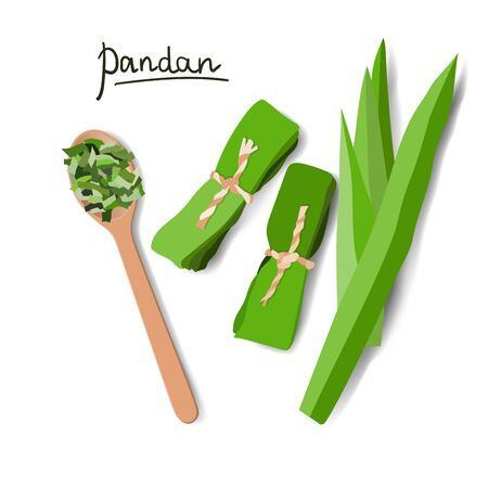 Vector illustration of pandan leaves, shredded pandan spices in wooden spoon and wrapped leaves