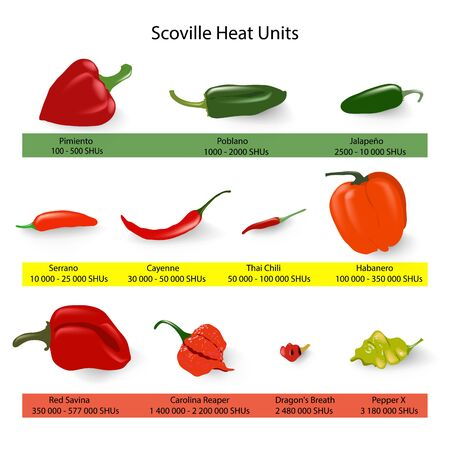 Scoville scale of chilli peppers spiciness, vector 일러스트