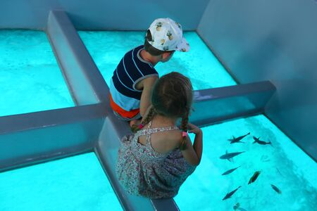 Children admiring the Red Sea underworld through the glass bottom of the boat