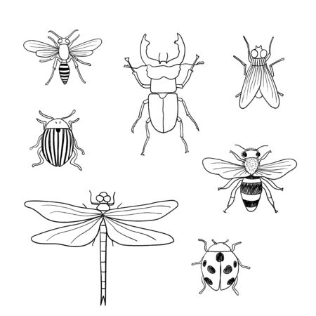 Different hand drawn doodle isolated insects. Vector illustration 向量圖像