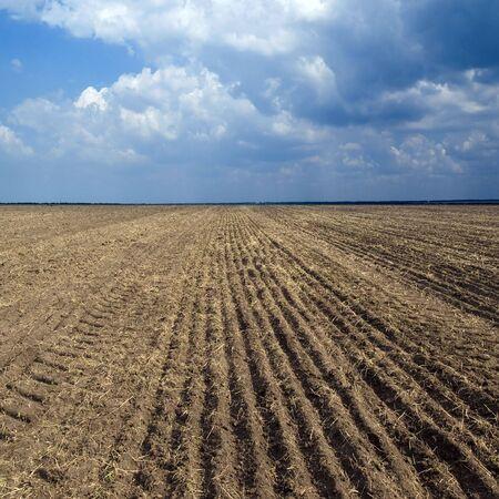 sowing: Brown sowing field.