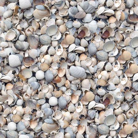 Shell nahtlose Hintergrund.  Standard-Bild - 4955964