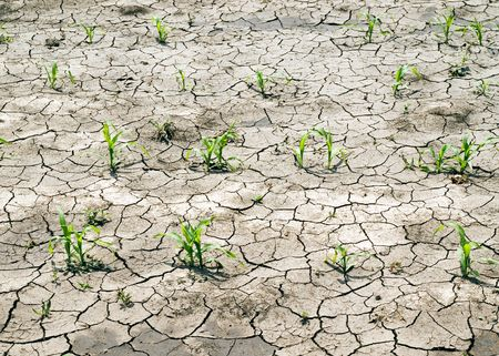 Young green sprouts on dried ground. photo