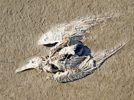 gull: Dead gull on ground background.