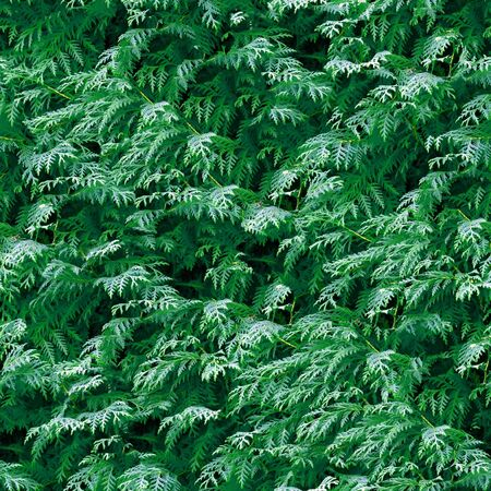 Branches of conifer seamless pattern. photo