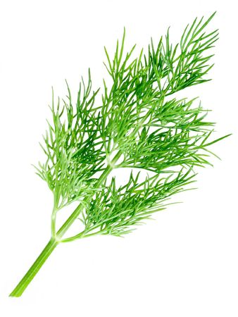 potherb: Dill on white background (isolated).