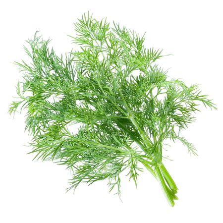 potherb: Dill bunch on white background (isolated).