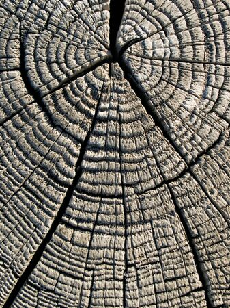 Wooden texture closeup circle background. photo