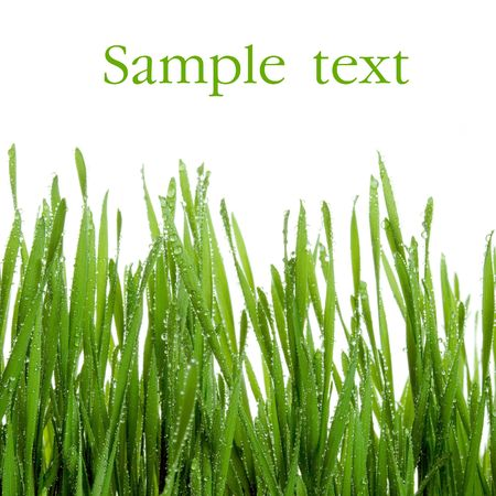 Wet green grass isolated on white background with space for text. photo