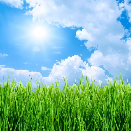 blades of grass: Green grass, sun and blue sky background. Stock Photo