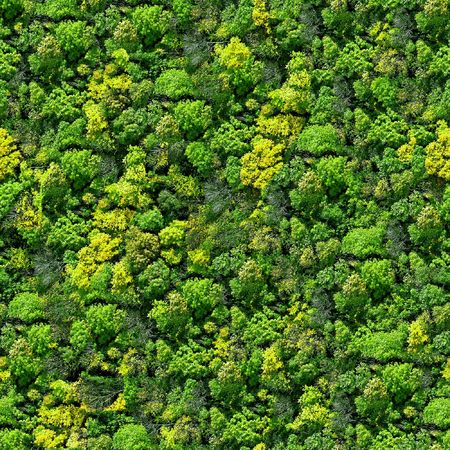 Forest seamless pattern - view from above. photo