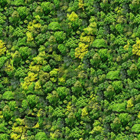 arbre vue dessus: La for�t mod�le sans soudure - afficher au-dessus.  Banque d'images
