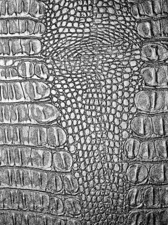 alligator: Black crocodile leather texture closeup background.
