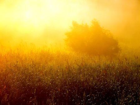 carex: Tree on morning mist.