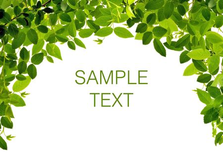 botanical gardens: Frame from green leafs isolated on white background with space for text.