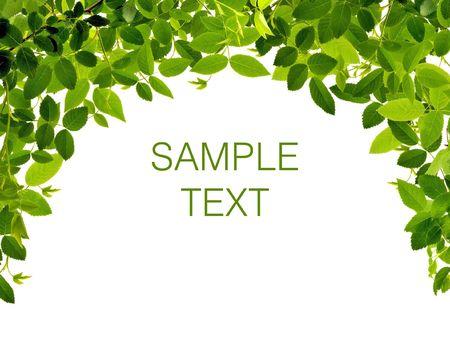 frescura: Marco de verde leafs aislado sobre fondo blanco con espacio para texto.