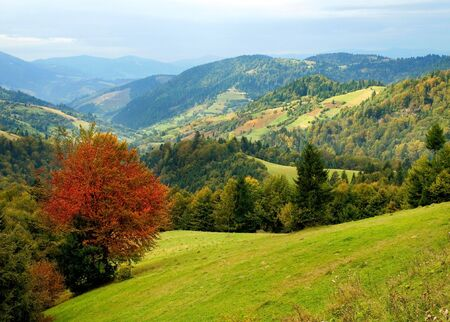 Ukrainian tranquil autumnal landscape with meadow and mountains. photo