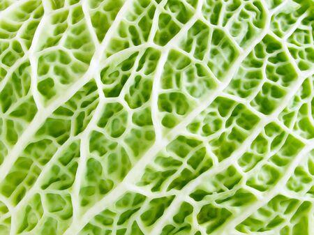 clean artery: Green organic texture closeup background.