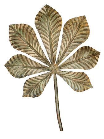 oxidated: Bronze chestnut leaf isolated on white background.