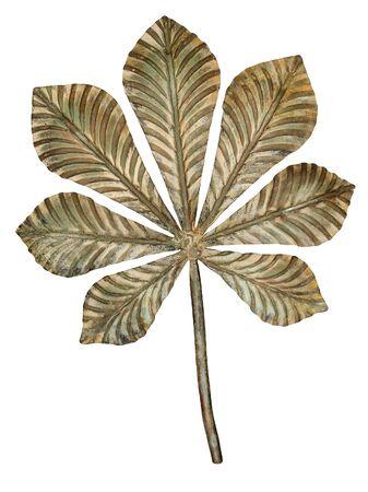 oxidated: Hoja de bronce casta�o aislada sobre fondo blanco.
