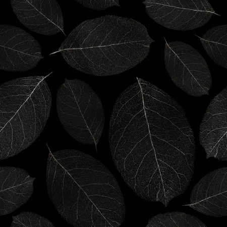 Dried leafs seamless background - seamless pattern for continuous replicate. See more seamless patterns in my portfolio. Stock Photo - 9093833