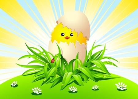 sprightly: Chicken on green grass. Illustration