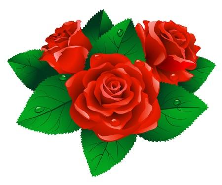 Red Roses with Green leafs auf weißem Hintergrund.
