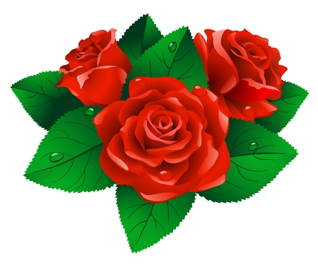 Red roses with green leafs on white background.