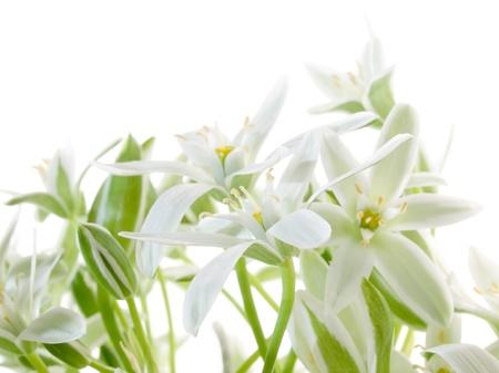 Blüten isolated on white Background.