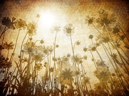 sun burnt: Flowers vintage background.