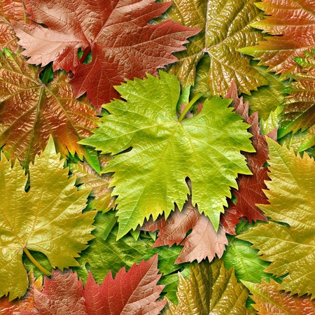 leafage: Vine leafage seamless background for continuous replicate. See more seamless backgrounds in my portfolio.