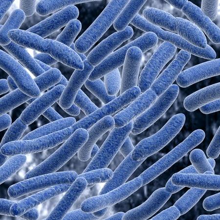 bacterias: Las bacterias.
